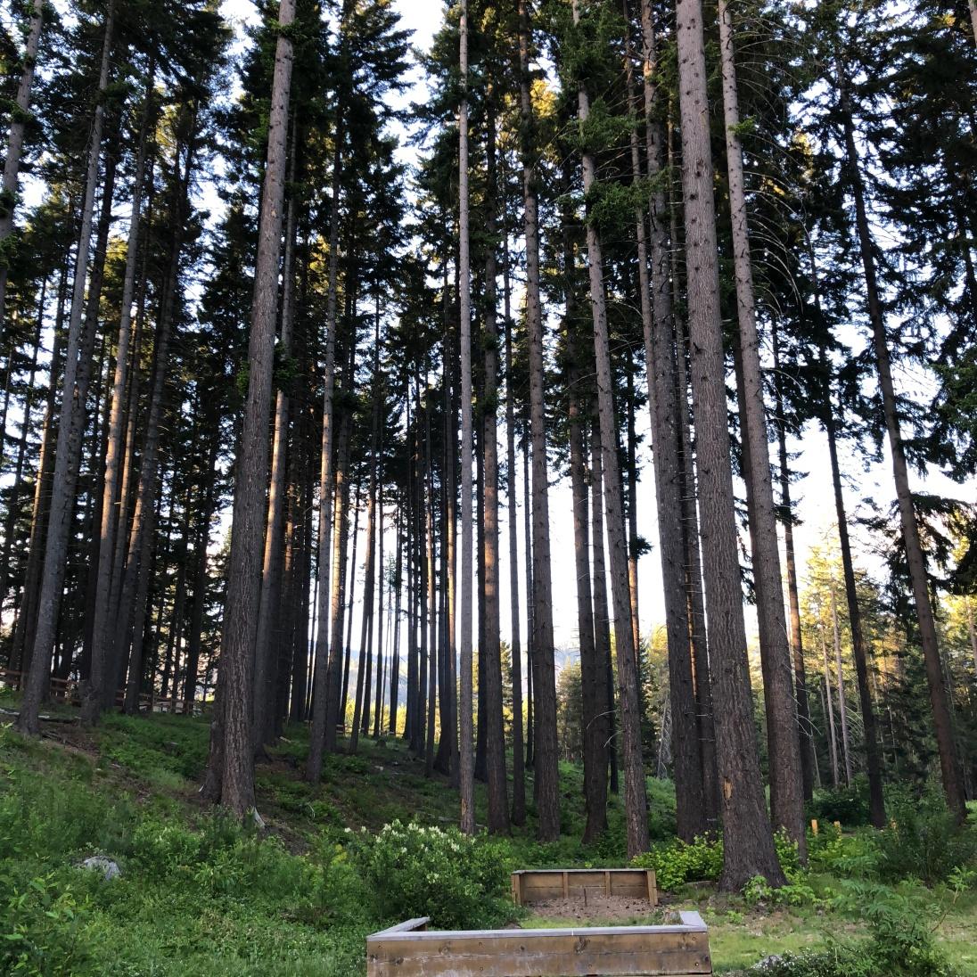 Trees everywhere